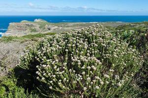 Seelandschaft mit Küstenpflanzen im Sommer