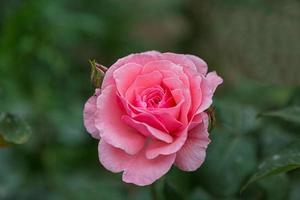 schöne Blumen, Nahaufnahme, kreativ