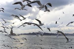 Istanbul Jungfrauenturm foto