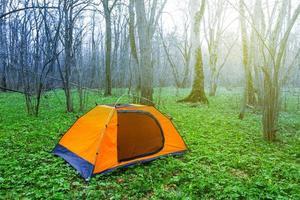 Touristenlager in einem grünen Frühlingswald foto