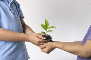 Kinderhand, die Wurfpflanze hält foto