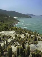 Kaktus 9