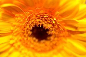 leuchtend gelbe Blume. foto