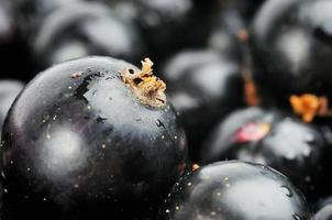schwarze Johannisbeeren foto