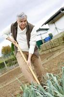 Mann kultiviert seine Gemüse mit Spaten foto