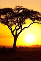 typischer afrikanischer Sonnenuntergang foto