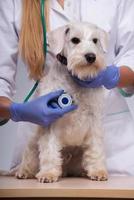 Tierärztin untersucht kleinen Hund mit Stethoskop foto