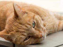 faule orange weibliche Katze, die auf tabel liegt foto