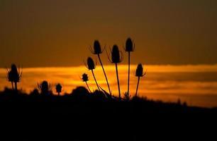 Silhouette bei Sonnenuntergang foto