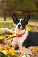 Mischlingshund im Freien Porträt foto