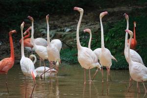 Flamingo-Feier