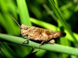 Insekteninsekt in der Natur
