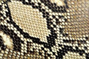 Schlangenhaut foto