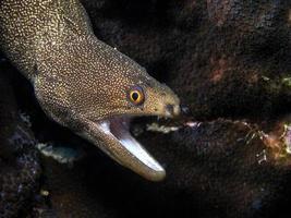 Unterwasserkorallenriff foto