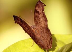 Nahaufnahme eines schönen Schmetterlings foto
