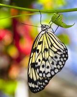 Papier Drachen Schmetterling foto