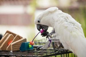verspielter weißer Kakadu foto