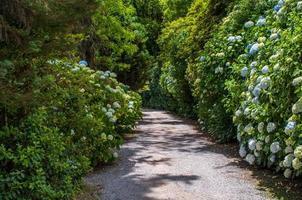 Weg auf dem Garten foto