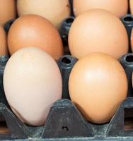 Eier in der Platte foto