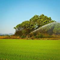 Bewässerung foto