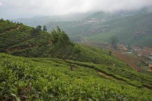 Sri Lanka, Nuwara Eliya, Buschtee, Ceylon, foto
