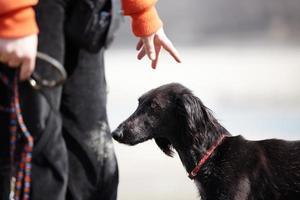 Trainer zeigt auf Hund und hält eine Leine
