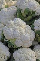 Blumenkohl, Brassica oleracea var. Botrytis