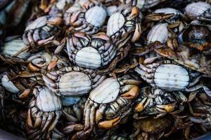 eingelegte Krabben foto