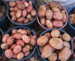 Kartoffeln foto
