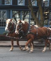 Team von braunen Pferden, die unsichtbare Kutsche ziehen foto