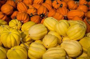 gelber und orange Eichelkürbis