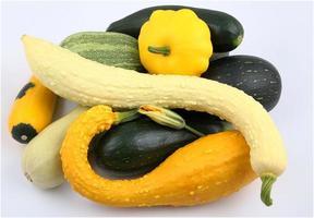 Kürbis und Zucchini