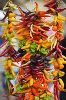 mehrfarbige scharfe Chilischoten foto
