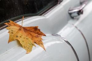 Ahornblatt auf einem nassen klassischen Auto
