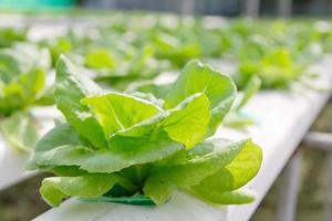 Hydrokultur Gemüsefarm foto