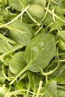 Rucola-Salat foto