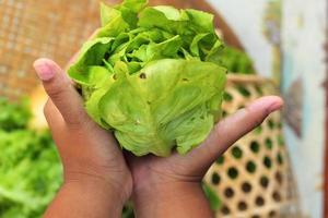 frischer grüner Gemüsesalat in der Hand. foto