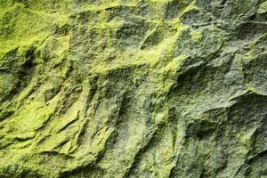 Moos auf Felsen foto