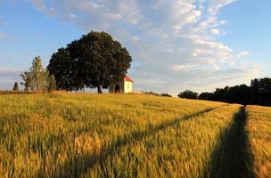 Weizenfeld mit Kapelle in der Slowakei foto
