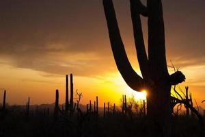 Sonnenuntergang über Saguaro np