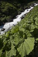 Fluss am Berg foto