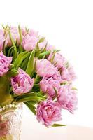 schöne lila Tulpen