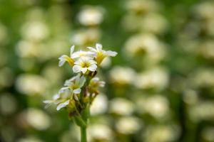 Sommerblumen foto
