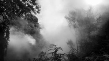 neblige Bäume wegen eines kochenden Flusses foto