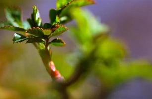Frühling! foto