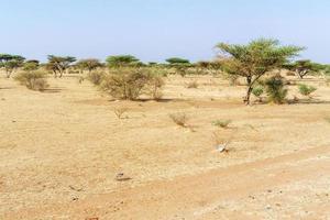 Sahara-Wüstenlandschaft nahe khartoum im Sudan foto