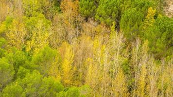 paisaje otoño foto