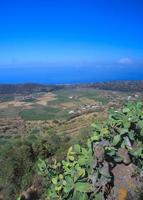 Plantage, Pantelleria
