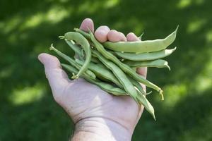 grüne Bohnen nach italienischer Art in Bauernhand foto