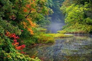 neblige Herbstlandschaft foto